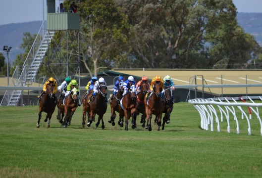 horserace2